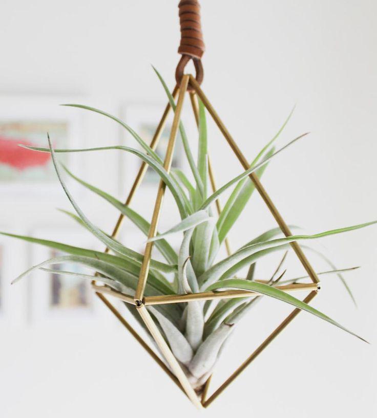 växter airplant ampel