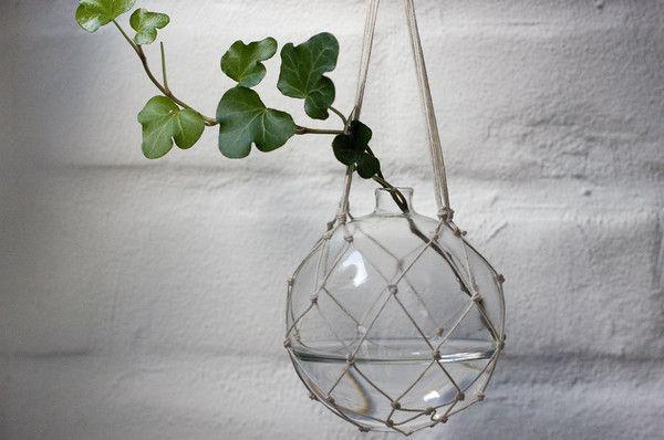 växter ampel glas