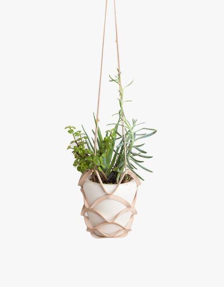 växter ampel läder