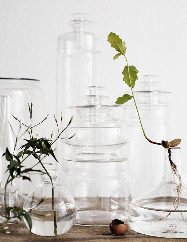 växter ekollon agaton