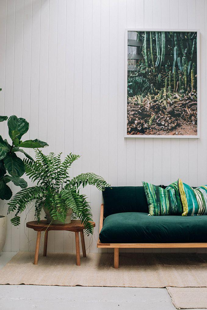 växter ormbunke