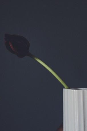 Lyngby vas tulip